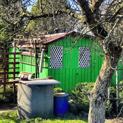 Allotment hut in spring time