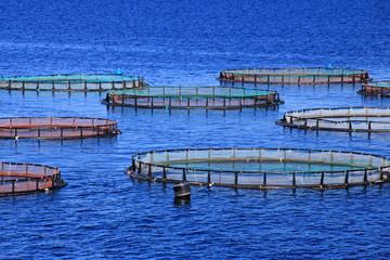 Fischzucht im Meer