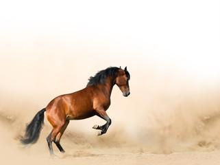 Türaufkleber Pferde Wild horse in prairies