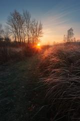 Sunrise near the autumn forest