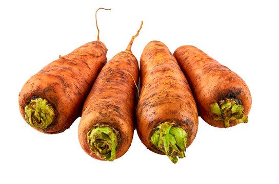 Fresh carrots on white background. Background of organic food.