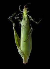 Ear of Corn on Black