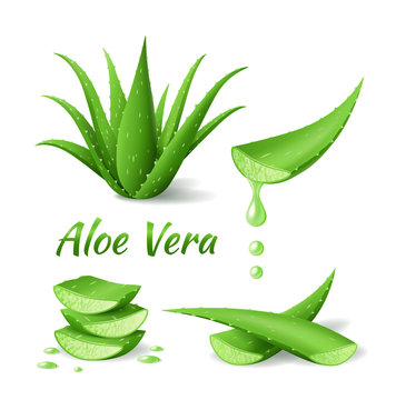 Set of Aloe Vera, realistic green plant, leaves and cut pieces