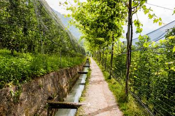 Algund, Waalweg, Apfelbäume, Obstplantagen, Obstbäume, Vinschgau, Südtirol, Sommer, Italien