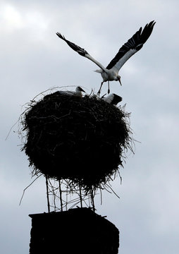 A white stork flies off its nest on a chimney in the town of Cvikov