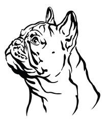 Decorative portrait of French Bulldog vector illustration