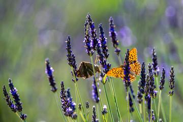 Fototapeta Motyle 22 obraz