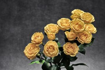 bukiet jasnych róż na ciemnym jednolitym tle