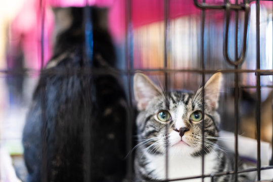 Closeup of two tabby and black young cats, kitten in a cage waiting for adoption in shelter