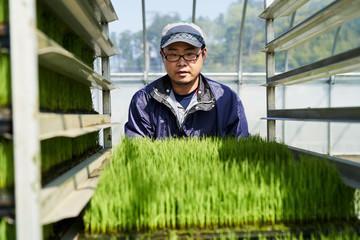 田植えで苗を運ぶ農家さん