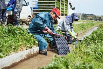 Farmers washing seedling box