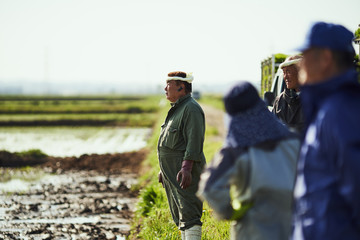 Farmers standing by rice field