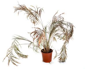 dead plant in studio