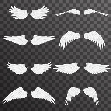 White wings bird animal angel fly 3d realistic design decoration element set transparent background vector illustration
