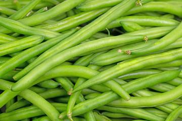 Grüne Bohnen, Phaseolus vulgaris