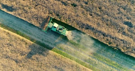 Wall Mural - Aerial view of harvesting land. Combine harvester on harvest field