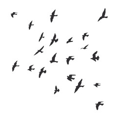 silhouette of a flock of flying birds