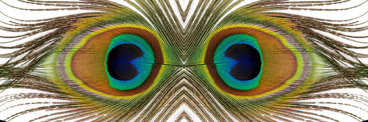 Beautiful exotic peacock feathers on white background. Close up