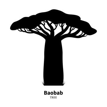 Black baobab tree silhouette
