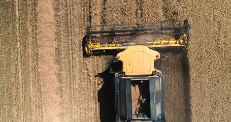 Wall Mural - Aerial view above harvesting combine on harvest field.