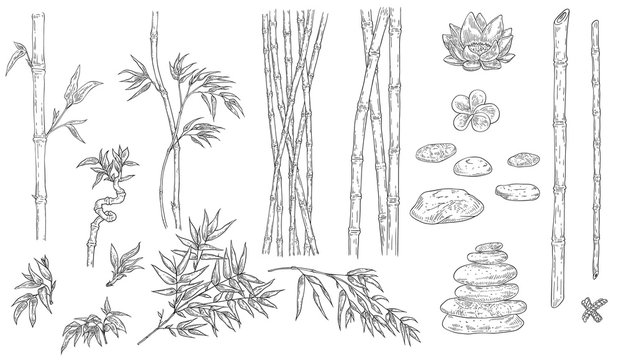 Bamboo and spa vector illustration set in sketch outline style.