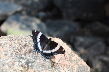 Image result for butterfly on pink granite