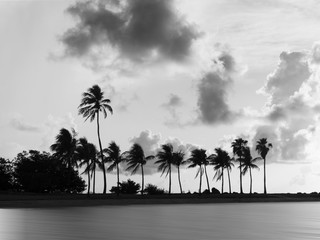 Black and white palm trees with soft water