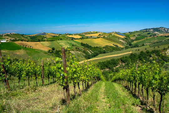 Abruzzo Vineyards