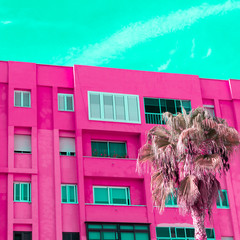 Spoed Foto op Canvas Roze Tropical palm. Canary island. Candy colours concept