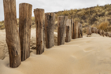 Domburg - Close-up to Timber Piles and Grass Dunes / Netherlands