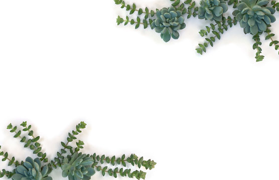 Creative frame of green blue succulents on a white background with space for text. Top view, flat lay