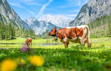 Kuh am Obersee Berchtesgaden Wall mural