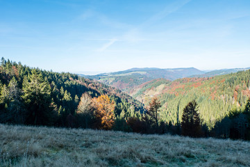 Black Forest with firs panorama