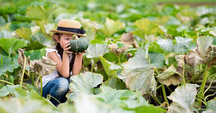 カボチャを収穫する女の子