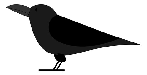 Black crow, illustration, vector on white background.