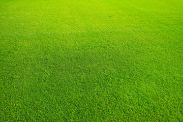 Green lawn for background. Green grass background texture. top view/Background of green grass. The texture of the football field. Texture green lawn