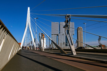 Foto auf Gartenposter Schwan A view of the Erasmus Bridge over the the Nieuwe Maas (New Meuse) River . Cityscape on sunny day. Rotterdam, Netherlands.