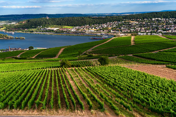 Overlooking the vineyard from the cable car in Niederwalddenkmal of Rüdesheim ,Germany.