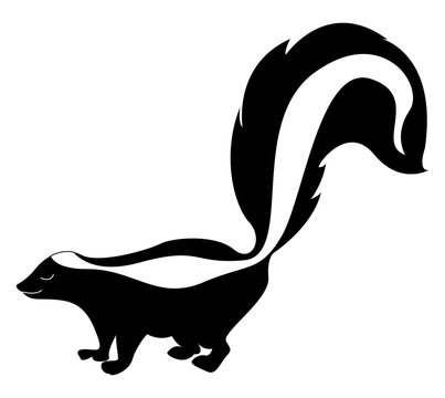 Skunk with big tail, illustration, vector on white background.