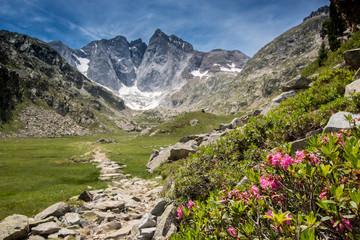 Fleurs et glacier, Pyrénées