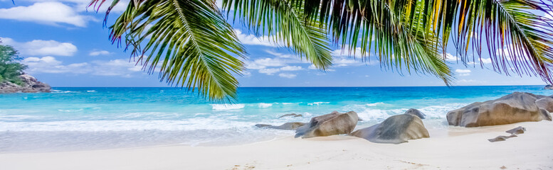 Aluminium Prints Caribbean tropical beach with palm trees, Seychelles