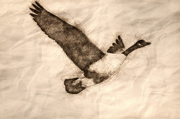 Wall Mural - Sketch of a Canada Goose Flying in a Blue Sky