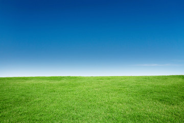 Foto auf Acrylglas Wiesen / Sumpfe Green Grass Texture with Blang Copyspace Against Blue Sky