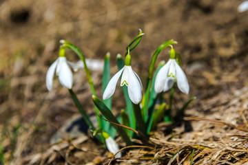 Wild spring flowerrs