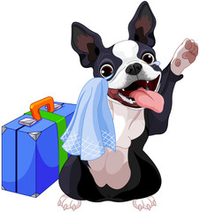 Poster Magie Boston Terrier With A Suitcase