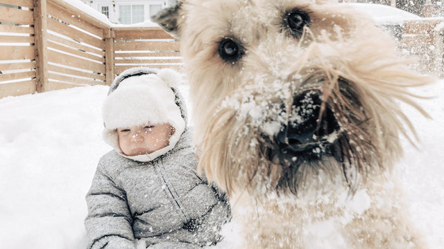 Dog photobombing a picture of a baby
