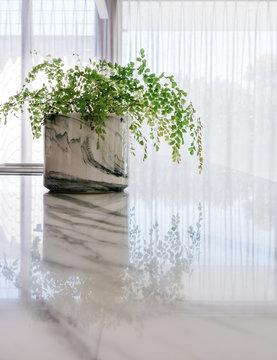 Indoor potplant fern on a calcutta marble countertop