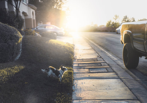 A small terrier dog stops to sniff the air in the suburbs