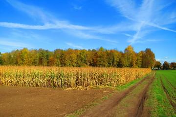 Feld Acker am Waldrand