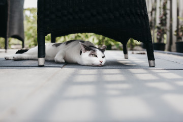 Cat lying under a garden chair searching for some shade